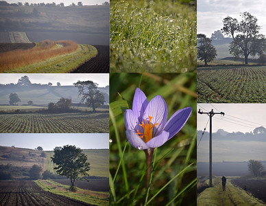 13.10.15 - October Fields  Some more shots of a misty morning out in the fields close to our house, including a very unseasonal crocus.