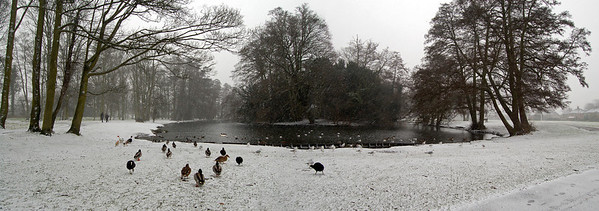 13.02.13 - Return of the White Stuff!  Snow was forecast for yesterday afternoon, and it duly arrived as I was walking into town for a meeting. I took the scenic route back home along the river and through Boultham Park to get some pics, as it was forecast to change to heavy rain later. This is a 2 shot photomerge panorama at the opposite end of the lake that I've used for panos previously. When I arrived I was mobbed by the ducks and coots who thought I was going to feed them. You can see that the moment they realised I was only taking photos they turned tail and headed back to the water! It is snowing quite heavily here, but it was very fine so it is hard to pick up.  Thanks for the wonderful comments to my night shot yesterday, it is one of my favourites. I'm really busy at the moment so my own commenting continues to be very patchy.