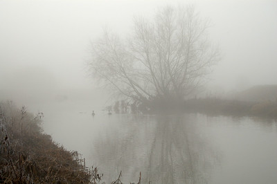 20.02.13 - Lost?  Another shot from Tuesday morning in the freezing fog. Thanks for the wonderful comments on yesterday's foggy shot by the fishponds, which was a couple of hundred yards away from this shot of the river.
