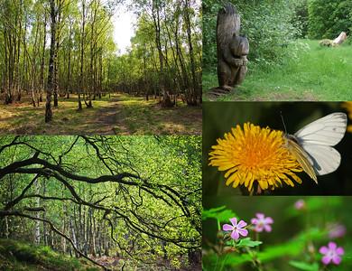 Birchwood Nature Reserve and Hospital Plantation
